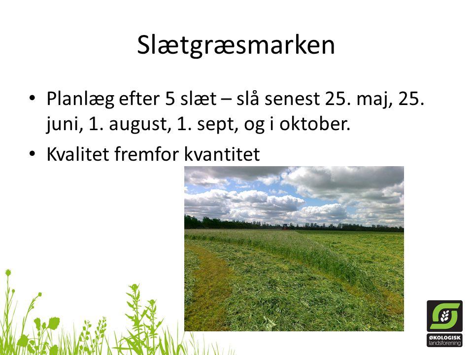 Slætgræsmarken Planlæg efter 5 slæt – slå senest 25. maj, 25. juni, 1. august, 1. sept, og i oktober.