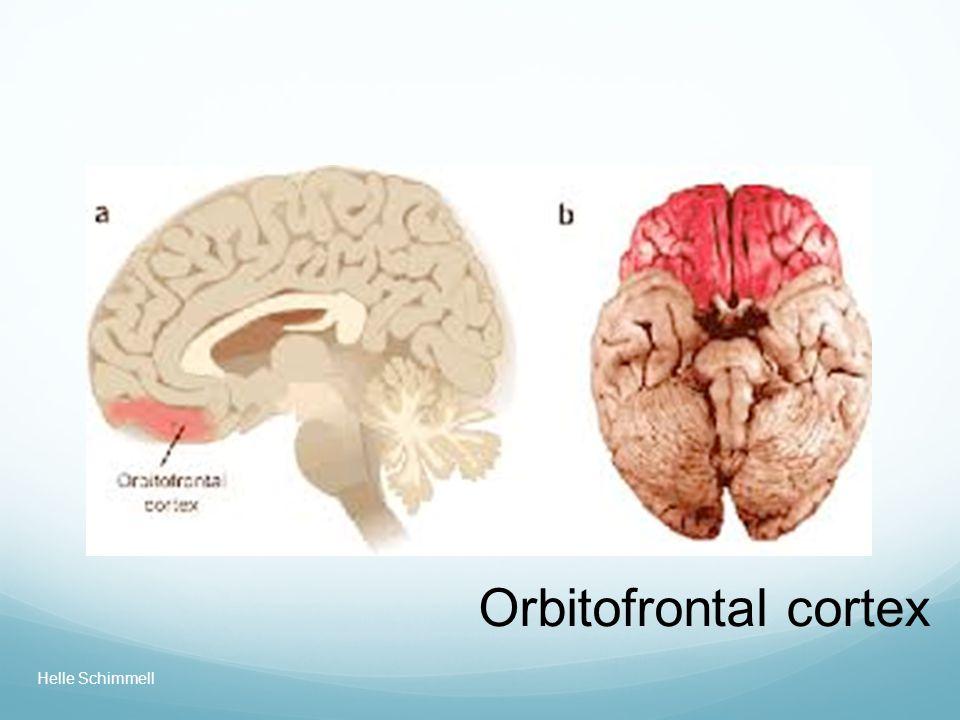 Orbitofrontal cortex Helle Schimmell