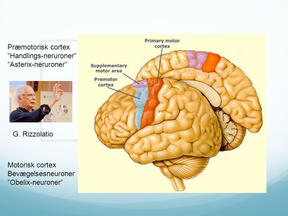 Joachim Bauer Præmotorisk cortex Handlings-neruroner