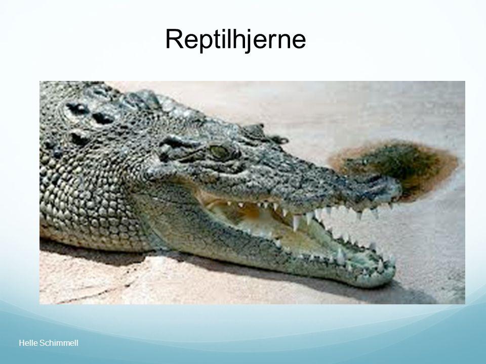 Reptilhjerne Helle Schimmell