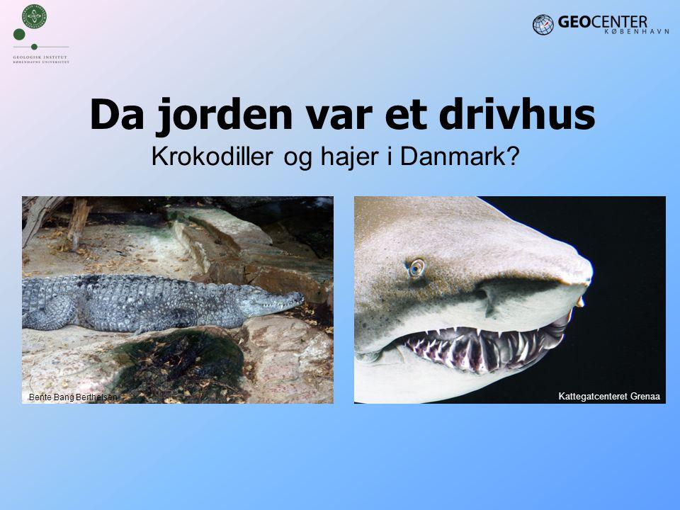 Da jorden var et drivhus Krokodiller og hajer i Danmark