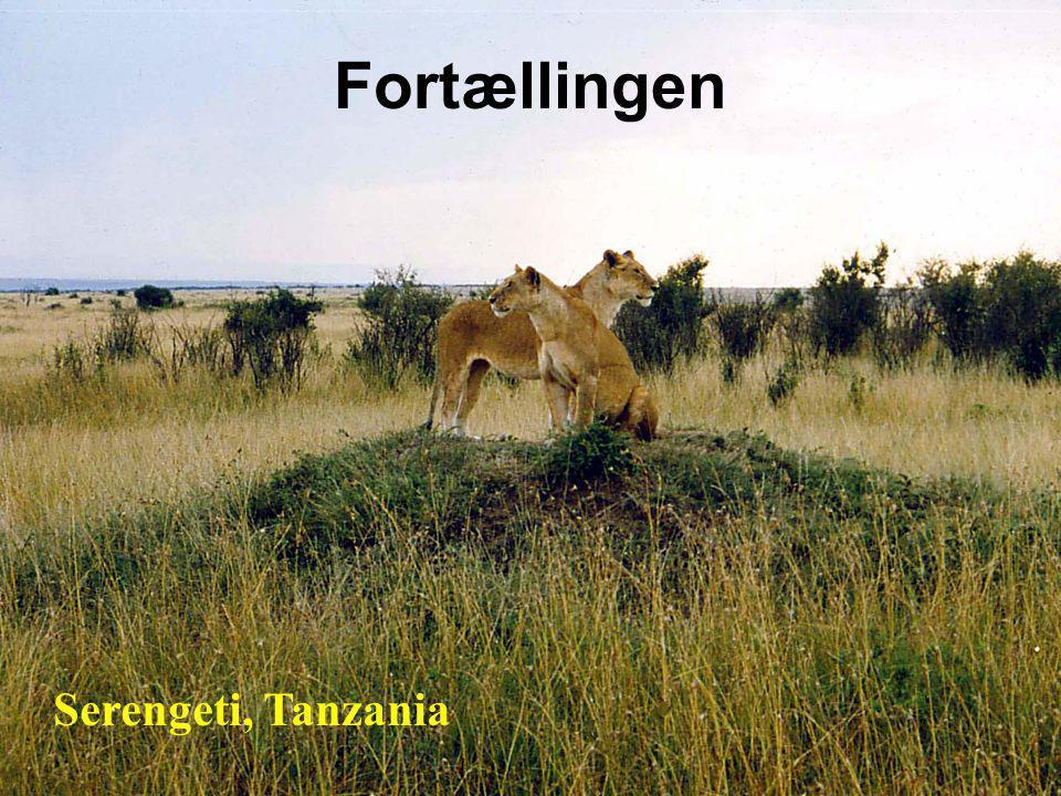 Fortællingen Serengeti, Tanzania