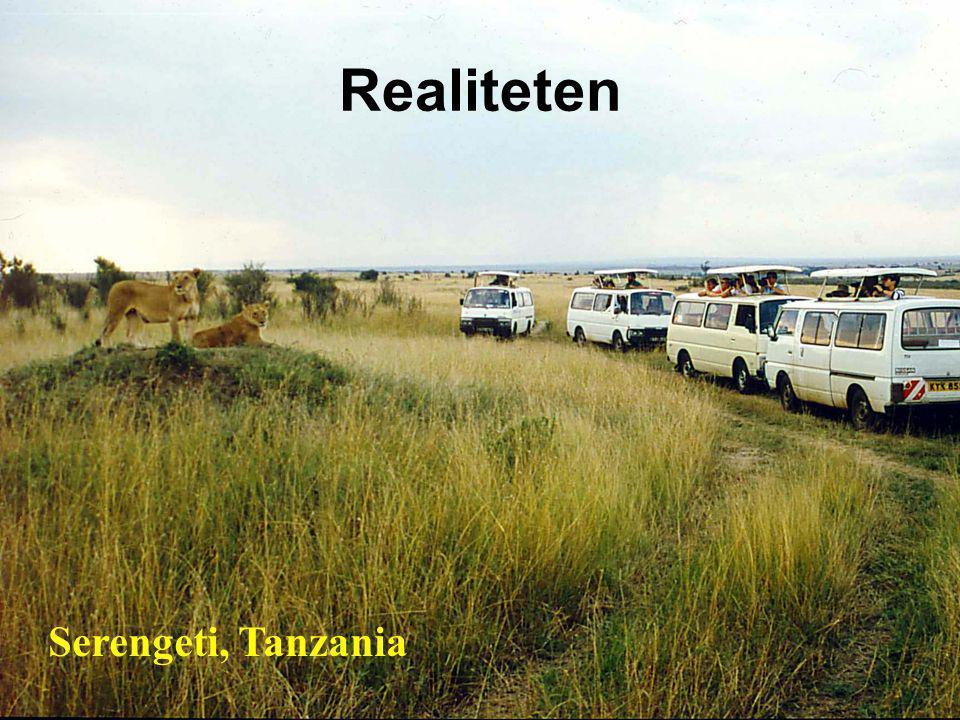 Realiteten Serengeti, Tanzania