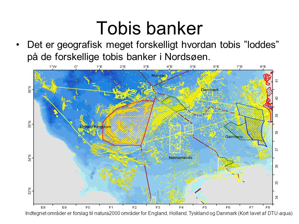 Tobis banker Det er geografisk meget forskelligt hvordan tobis loddes på de forskellige tobis banker i Nordsøen.