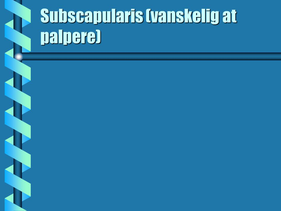 Subscapularis (vanskelig at palpere)