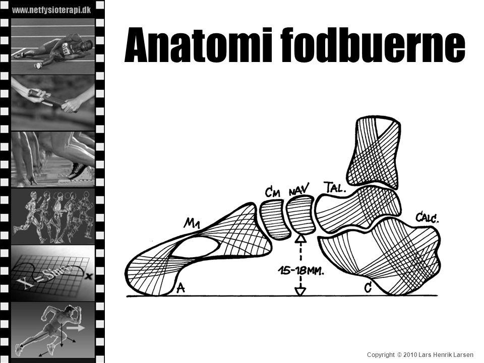 Anatomi fodbuerne