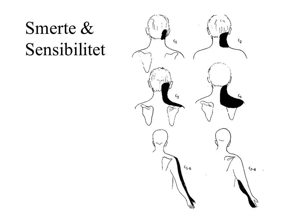 Smerte & Sensibilitet