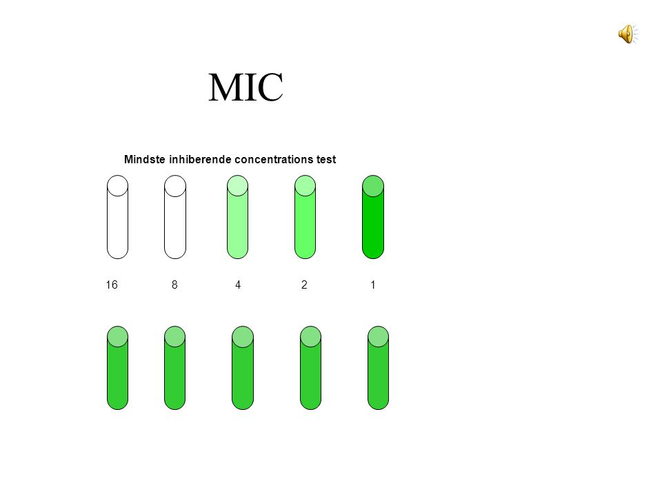 MIC Mindste inhiberende concentrations test 16 8 4 2 1