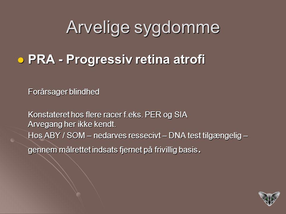 Arvelige sygdomme PRA - Progressiv retina atrofi Forårsager blindhed