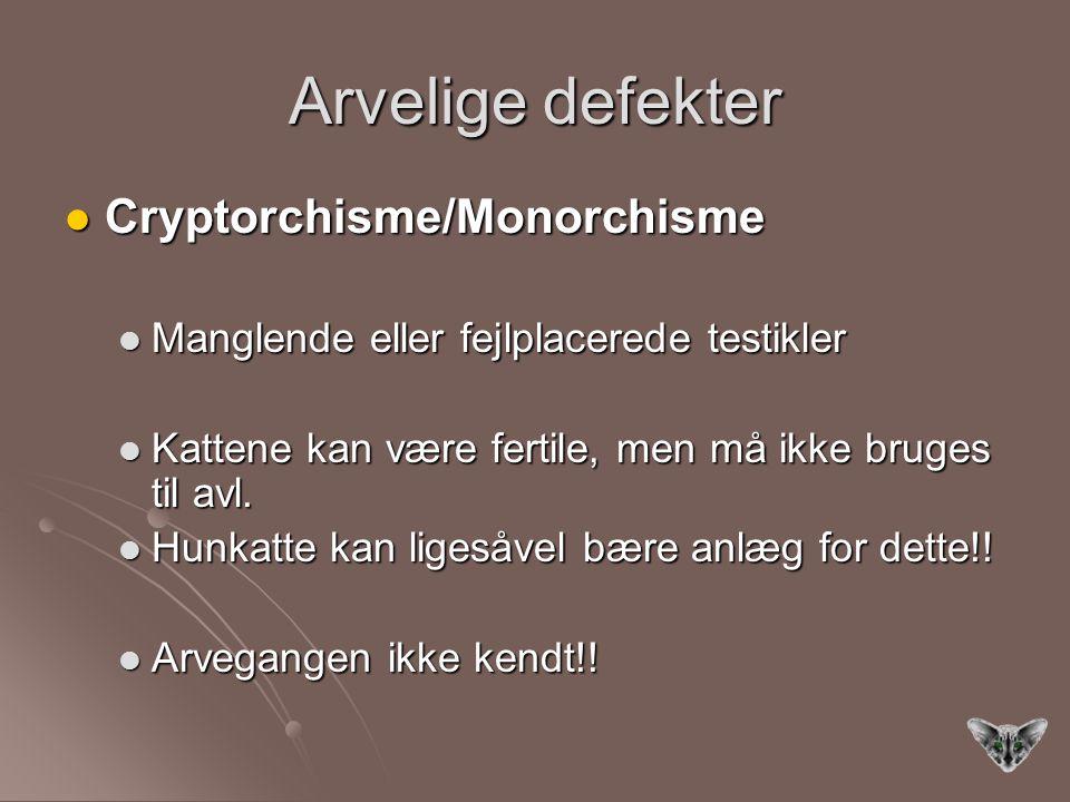 Arvelige defekter Cryptorchisme/Monorchisme