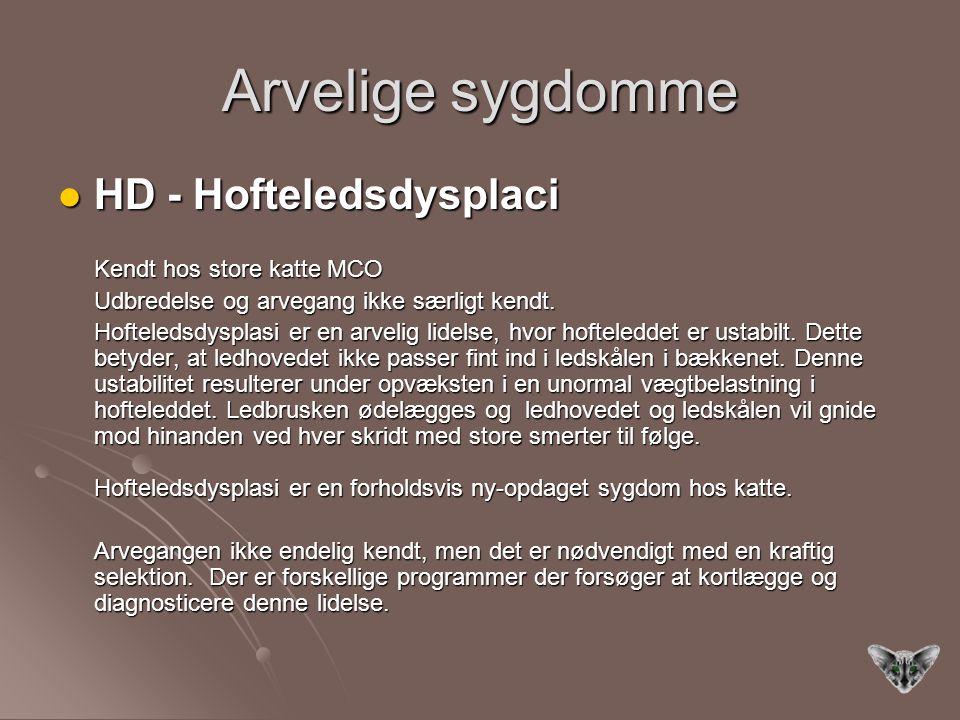 Arvelige sygdomme HD - Hofteledsdysplaci Kendt hos store katte MCO