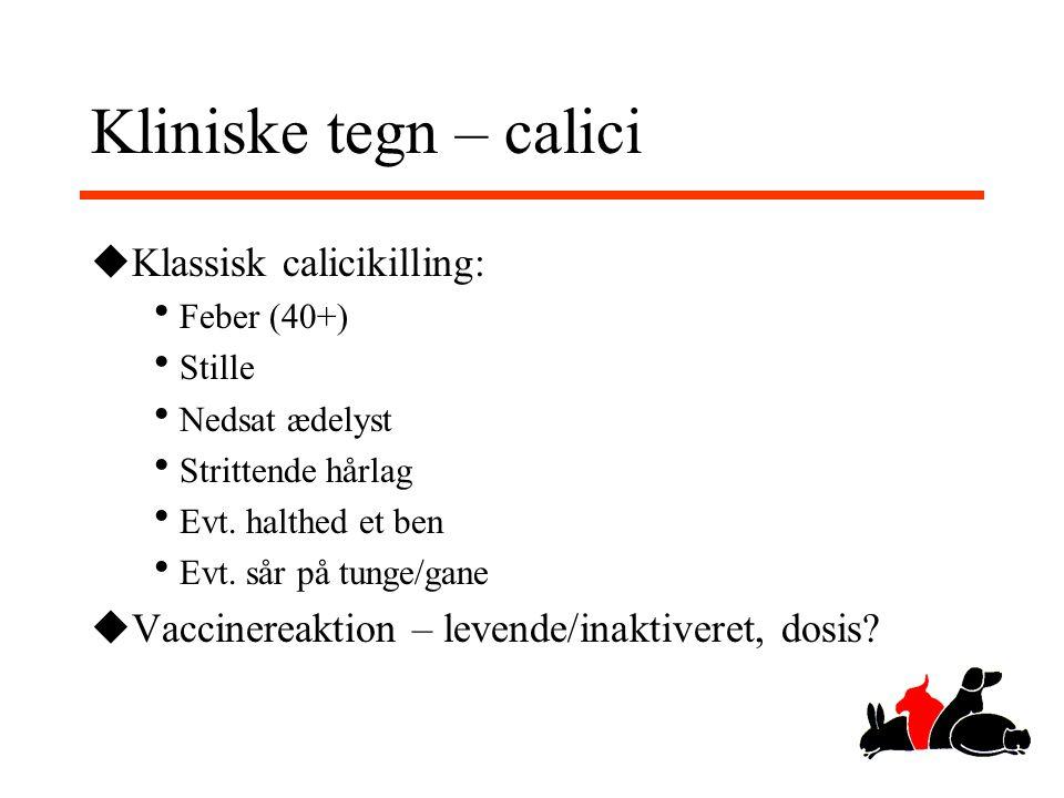 Kliniske tegn – calici Klassisk calicikilling: