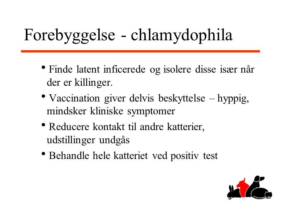 Forebyggelse - chlamydophila