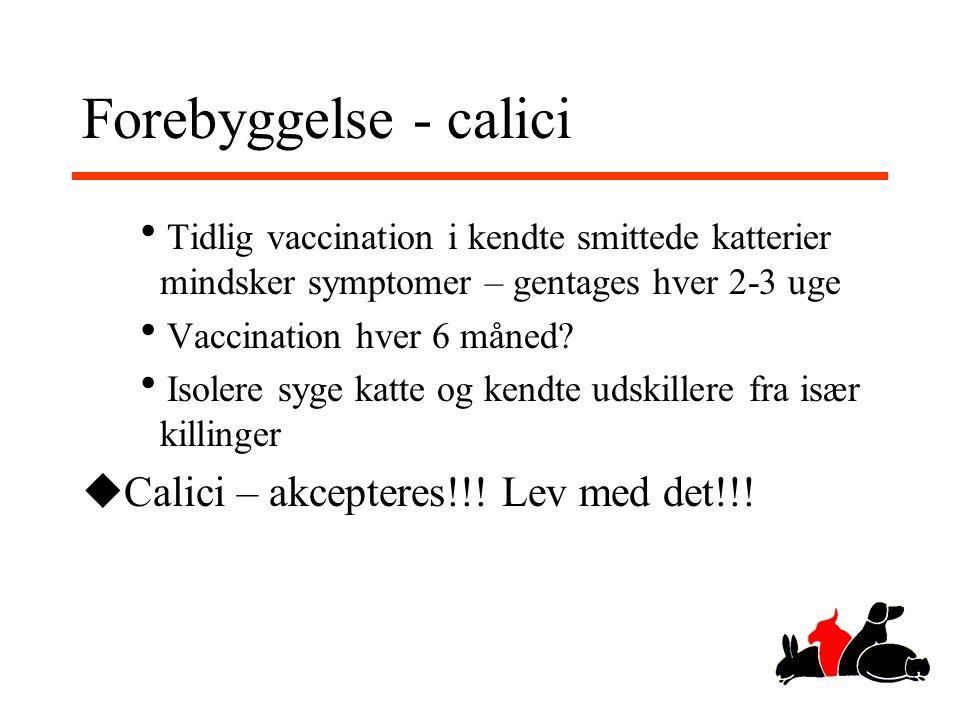 Forebyggelse - calici Calici – akcepteres!!! Lev med det!!!