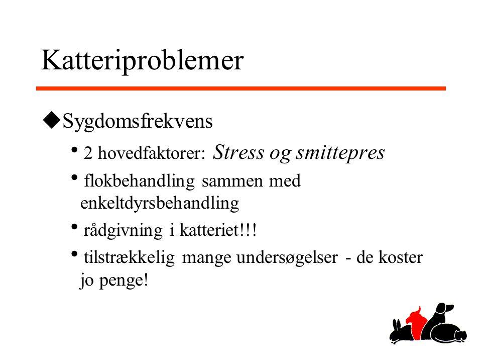 Katteriproblemer Sygdomsfrekvens 2 hovedfaktorer: Stress og smittepres