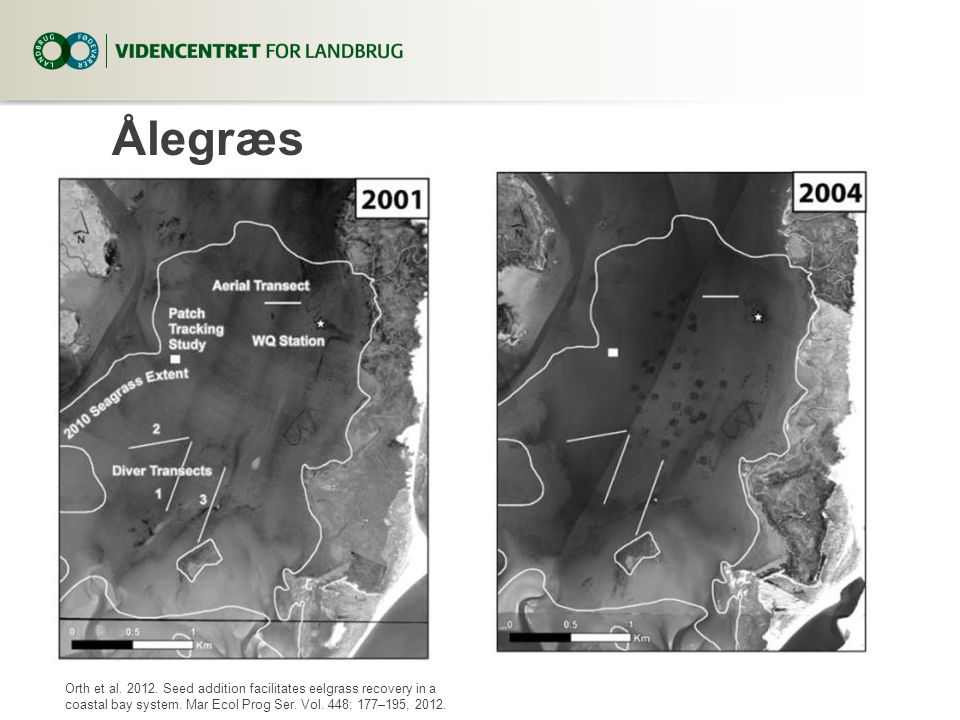 Ålegræs Orth et al Seed addition facilitates eelgrass recovery in a coastal bay system.