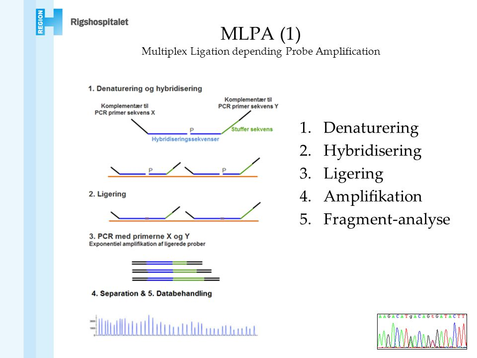 MLPA (1) Multiplex Ligation depending Probe Amplification