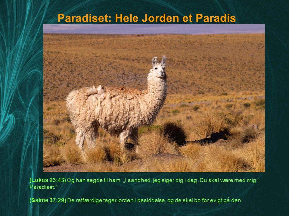 Paradiset: Hele Jorden et Paradis