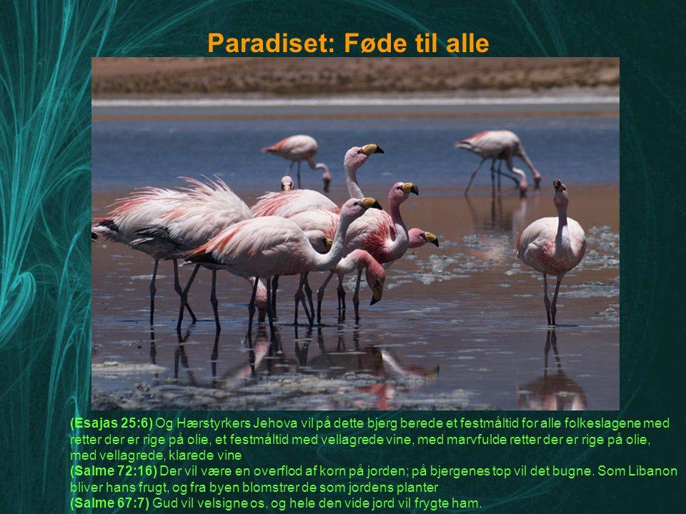 Paradiset: Føde til alle