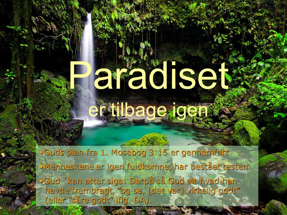 Paradiset er tilbage igen