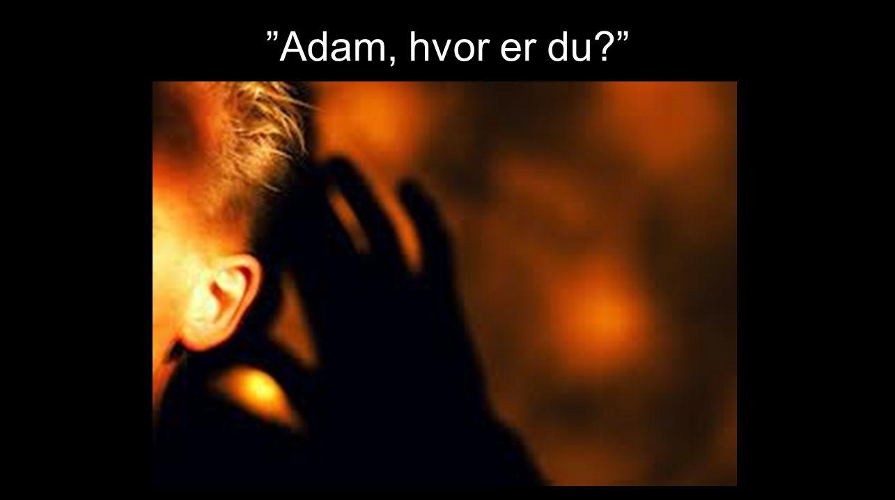 Adam, hvor er du …………… .