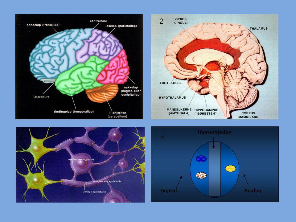 1 2 Hjernebjælke 3 4 4 Digital Analog
