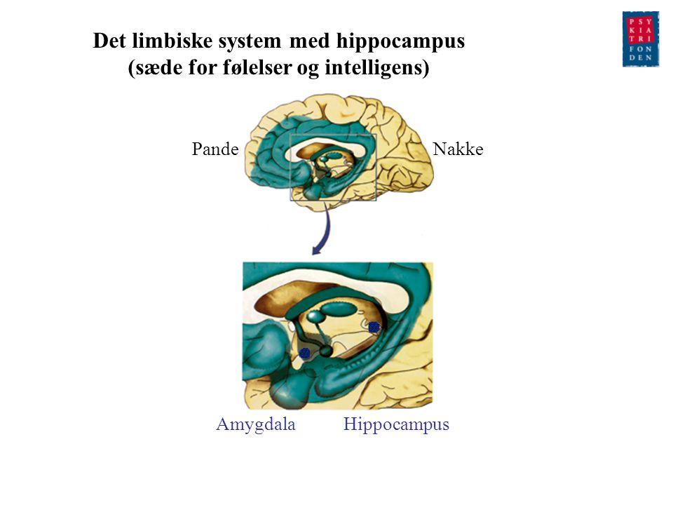 Det limbiske system med hippocampus (sæde for følelser og intelligens)