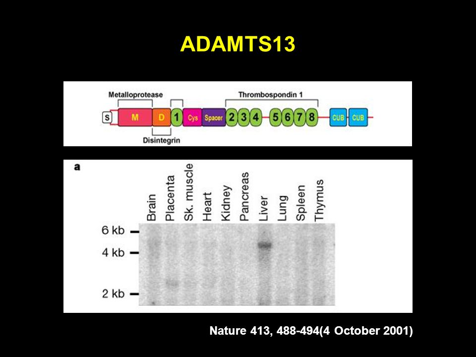 ADAMTS13 Nature 413, 488-494(4 October 2001)