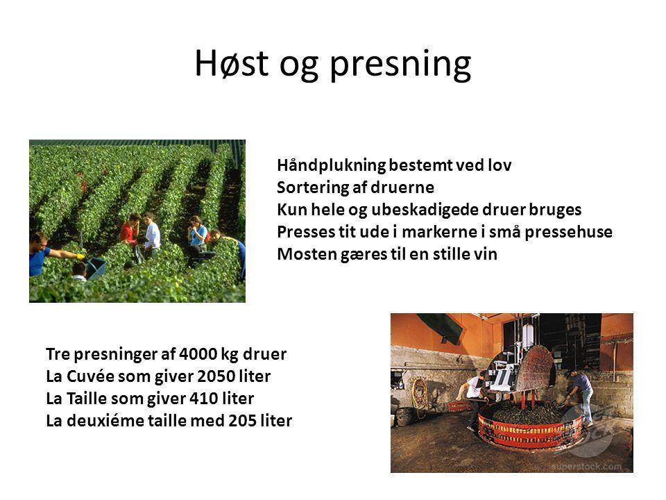 Høst og presning Håndplukning bestemt ved lov Sortering af druerne