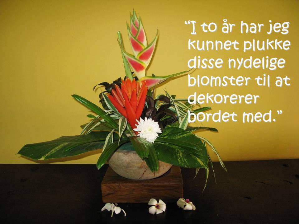I to år har jeg kunnet plukke disse nydelige blomster til at dekorerer bordet med.