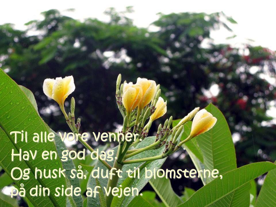Til alle vore venner. Hav en god dag. Og husk så, duft til blomsterne, på din side af vejen.