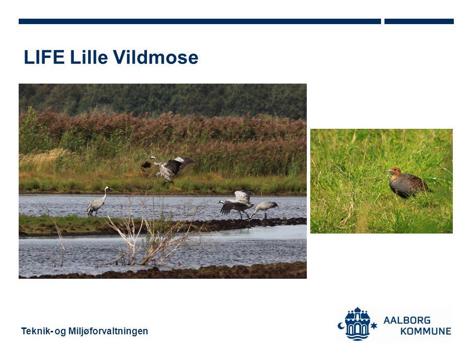 LIFE Lille Vildmose