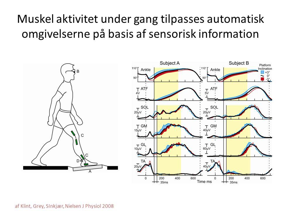 Muskel aktivitet under gang tilpasses automatisk omgivelserne på basis af sensorisk information