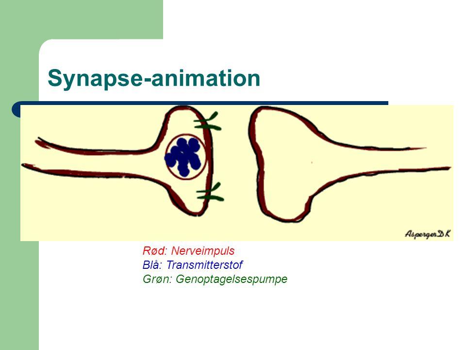 Synapse-animation Rød: Nerveimpuls Blå: Transmitterstof