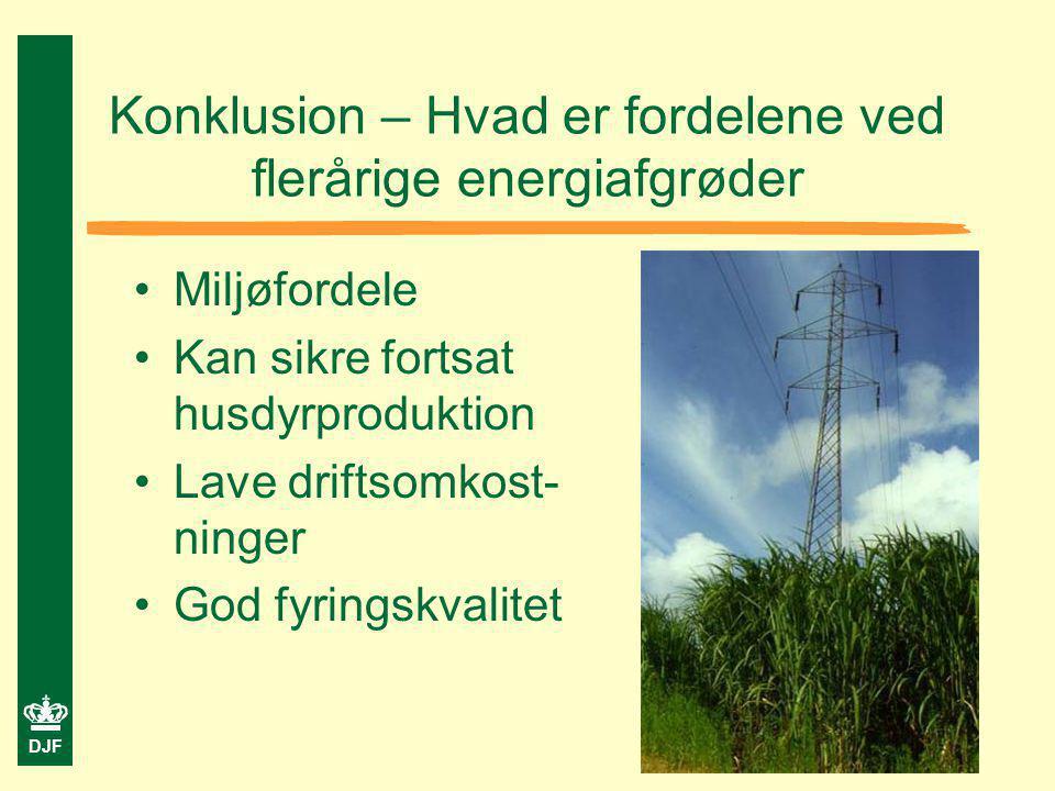 Konklusion – Hvad er fordelene ved flerårige energiafgrøder