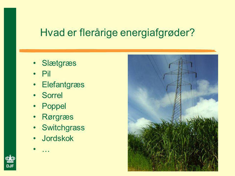 Hvad er flerårige energiafgrøder