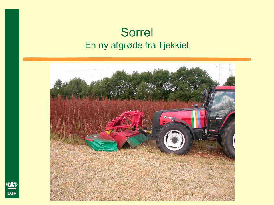Sorrel En ny afgrøde fra Tjekkiet