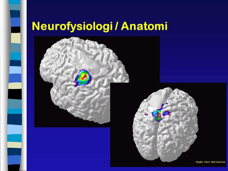 Neurofysiologi / Anatomi