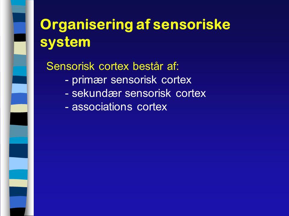 Organisering af sensoriske system