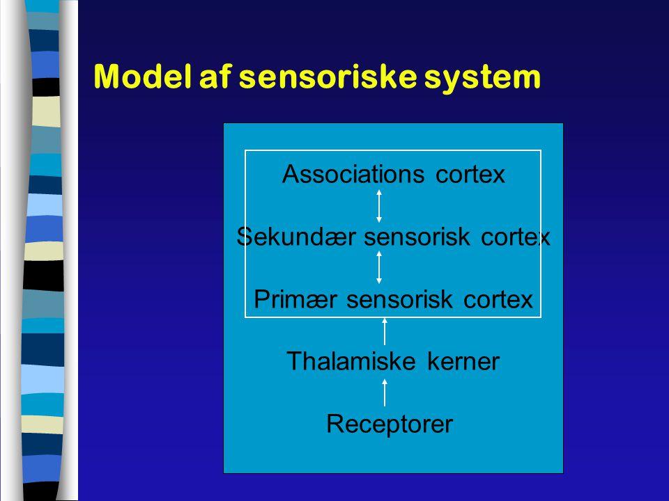 Model af sensoriske system
