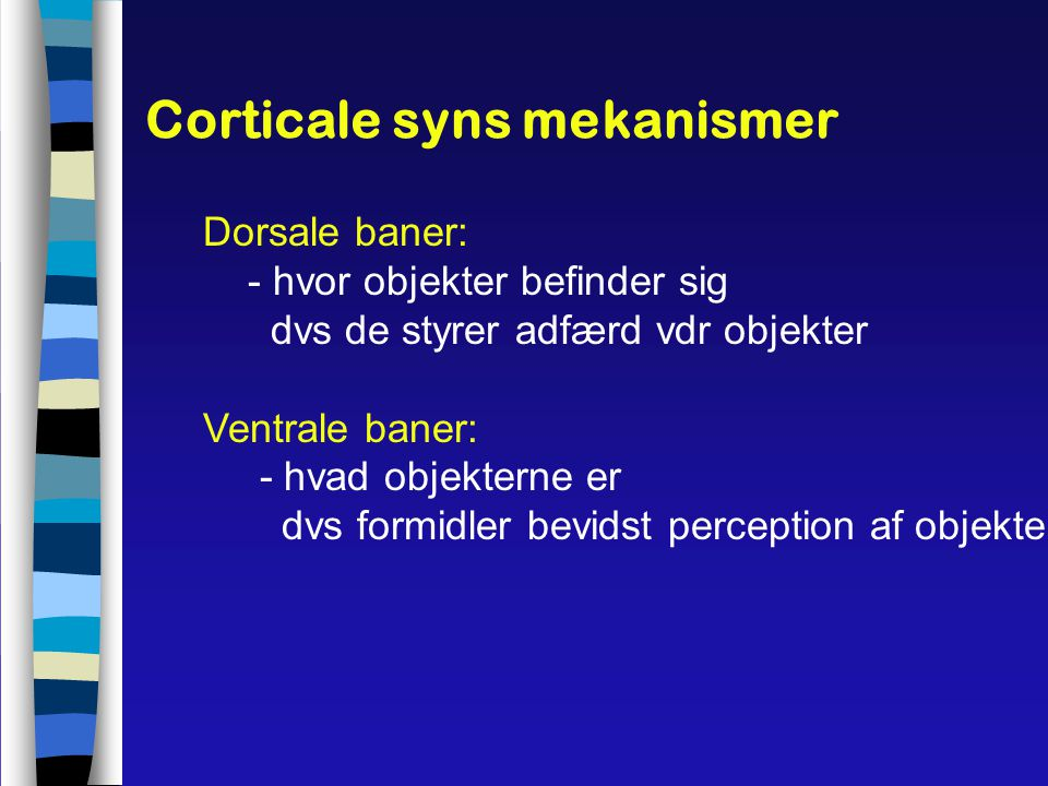 Corticale syns mekanismer