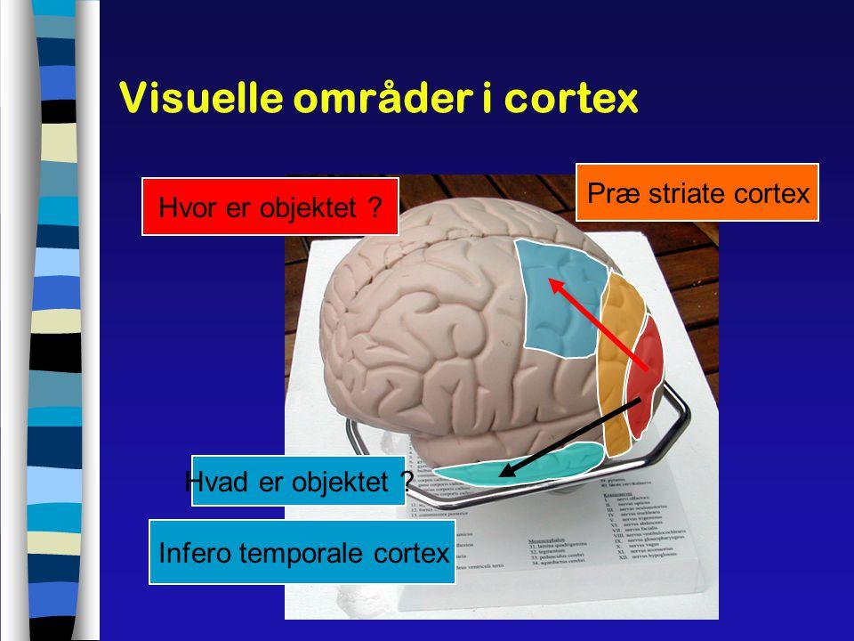 Visuelle områder i cortex