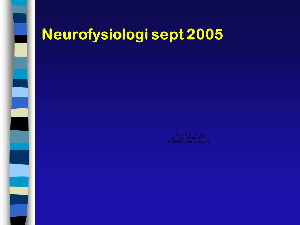 Neurofysiologi sept 2005