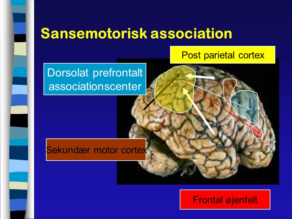 Sansemotorisk association