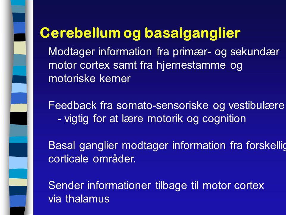 Cerebellum og basalganglier