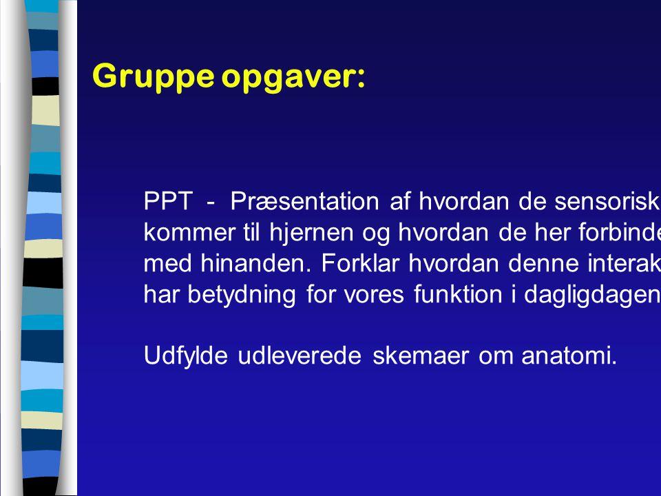 Gruppe opgaver: PPT - Præsentation af hvordan de sensoriske input