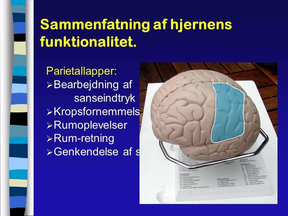 Sammenfatning af hjernens funktionalitet.