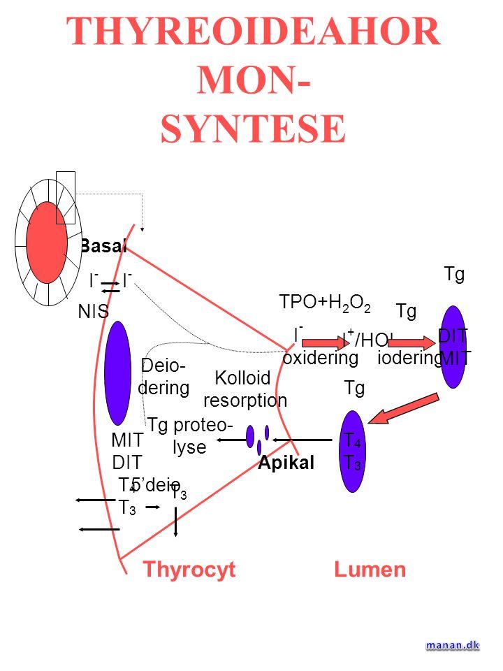 THYREOIDEAHORMON- SYNTESE