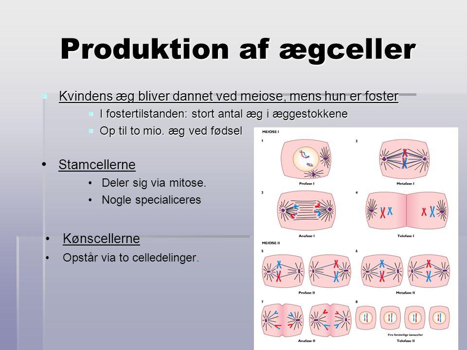 Produktion af ægceller