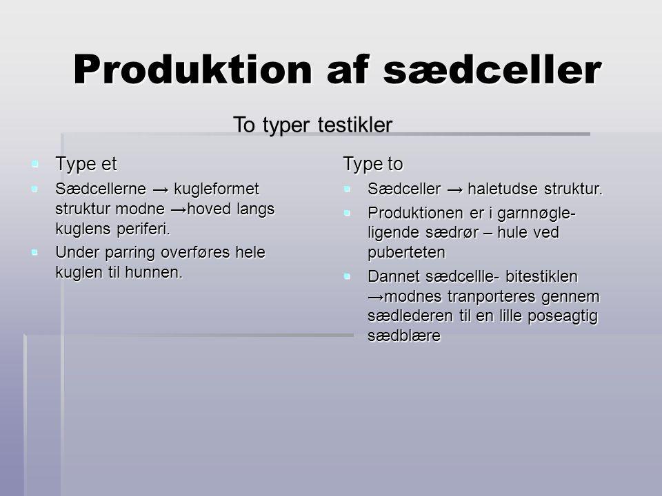 Produktion af sædceller